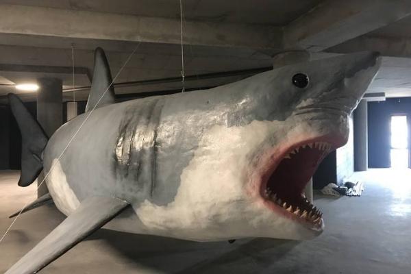 Oceanarium Międzyzdroje - Wodny Świat - Rekiny